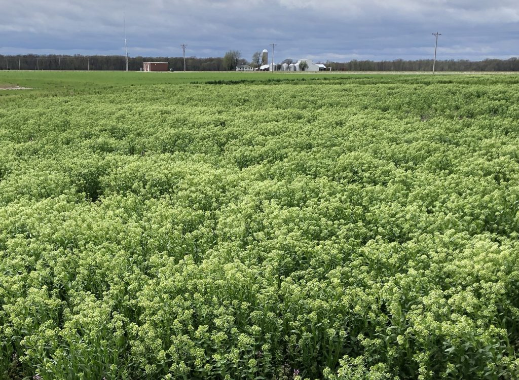 CoverCress Collaborates with Salk Institute on Cover Crop Carbon-Sequestration Research