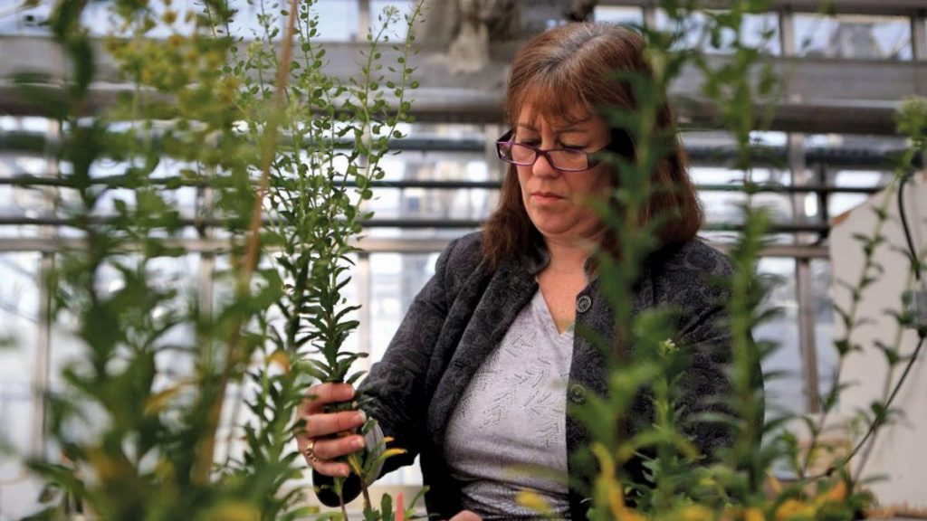 (IL Farmer Today) Startups find Space to Grow at BRDG Park at the Danforth Center